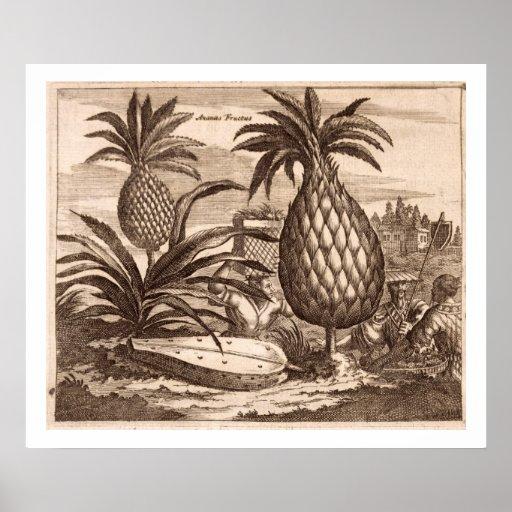Cultivo de las piñas grandes, ejemplo de un desc impresiones