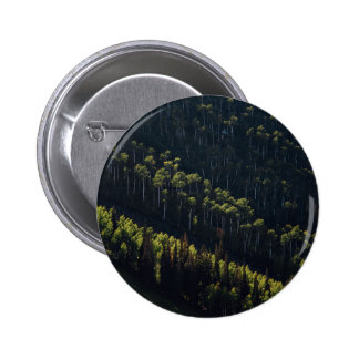Cultivo del bosque pin redondo 5 cm