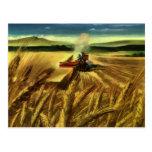 Cultivo del trigo del vintage