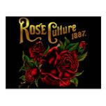 Cultura color de rosa 1887 tarjeta postal