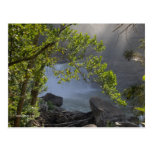 Cumberland Falls Postcard