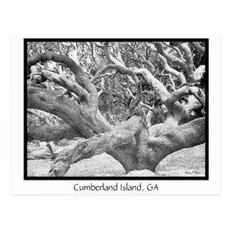 Cumberland Island, GA Postcard