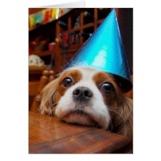 Cumpleaños arrogante del perro de aguas de rey tarjeta de felicitación
