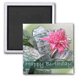 Cumpleaños Bromeliad rosado Imán Cuadrado