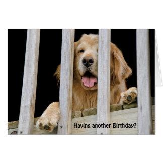 Cumpleaños chistoso del golden retriever tarjeta de felicitación