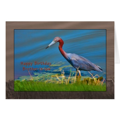 Cumpleaños, cuñado, pájaro de la garza de pequeño  tarjetón