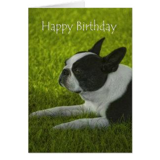 Cumpleaños de Boston Terrier Tarjeta