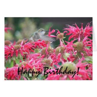 Cumpleaños de la foto del colibrí tarjeta de felicitación