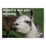 Cumpleaños de la llama felicitación