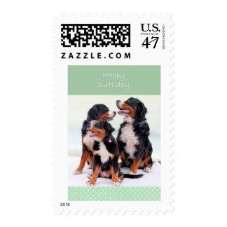 Cumpleaños de los perros de montaña de Bernese Timbres Postales