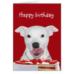 Cumpleaños de Terrier de pitbull Tarjeta De Felicitación