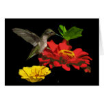 Cumpleaños del colibrí y de los Zinnias Tarjeta De Felicitación