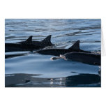 Cumpleaños del delfín tarjeta