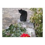 Cumpleaños del gato del jardín anuncio