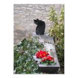 Cumpleaños del gato del jardín invitación