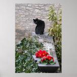 Cumpleaños del gato del jardín posters