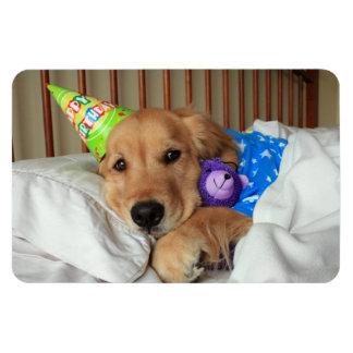 Cumpleaños del golden retriever imán flexible