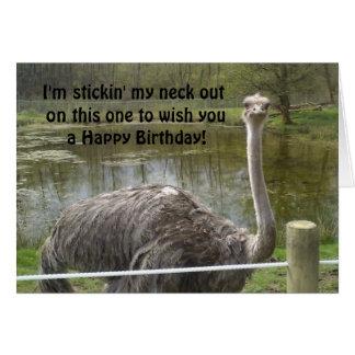 Cumpleaños divertido de la avestruz tarjeta de felicitación
