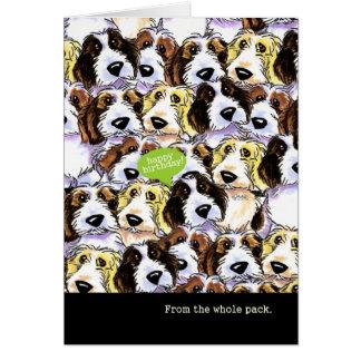Cumpleaños divertido de perros del grupo PBGV Tarjeta De Felicitación