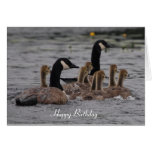 Cumpleaños - gansos canadienses tarjeta