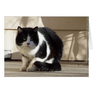 Cumpleaños, gato negro del blanco de N Tarjeta De Felicitación