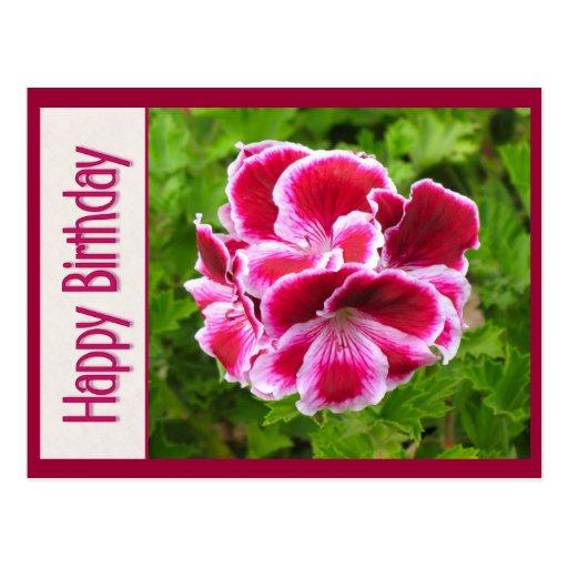 cumpleaños rosado de la flor blanca postales