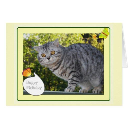 Cumpleaños - tarjeta del gato