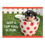 Cup Full O' Pup Chihuahua Postcard