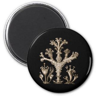 Cup Lichen 2 Inch Round Magnet