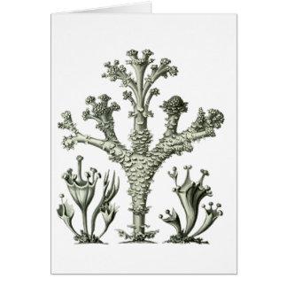 Cup Lichen Card