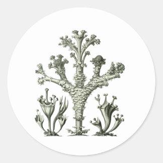 Cup Lichen Classic Round Sticker