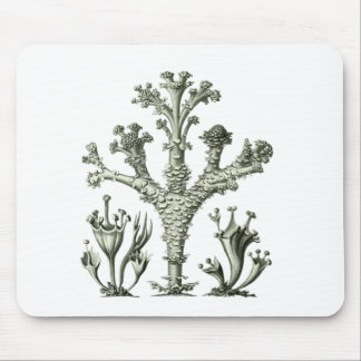 Cup Lichen Mouse Pads