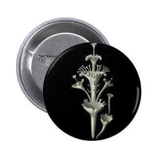 Cup Lichen Pinback Button