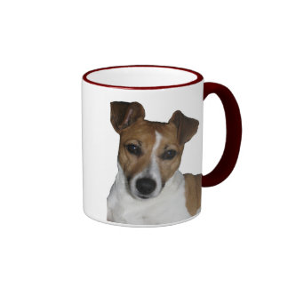 Cup of Jack Russell Terrier