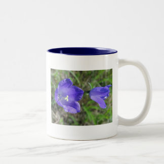 Cup of two blue bellflowers