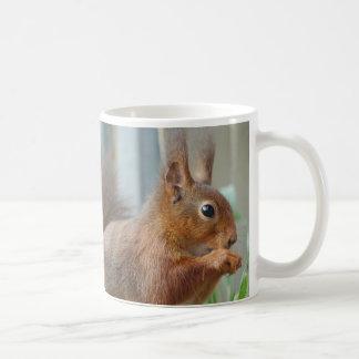 Cup SQUIRREL squirrel Écureuil of JL Glineur
