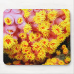 cupcoral mouse pad