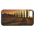 (cupressus sempervirens) - Europe, Italy, iPhone 5 Covers