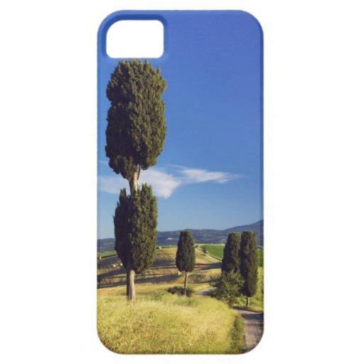(cupressus sempervirens)  - Europe, Italy, iPhone 5 Cover