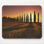 (cupressus sempervirens) - Europe, Italy, Mouse Pad