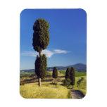 (cupressus sempervirens)  - Europe, Italy, Flexible Magnet