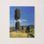 (cupressus sempervirens)  - Europe, Italy, Puzzle