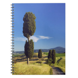 (cupressus sempervirens)  - Europe, Italy, Spiral Notebook