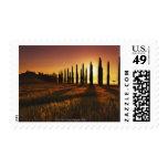(cupressus sempervirens) - Europe, Italy, Stamp