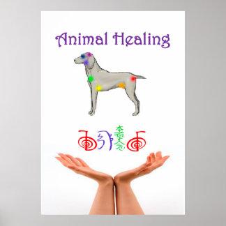 Cura del animal póster