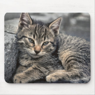 Curbside Kitten Mouse Pad