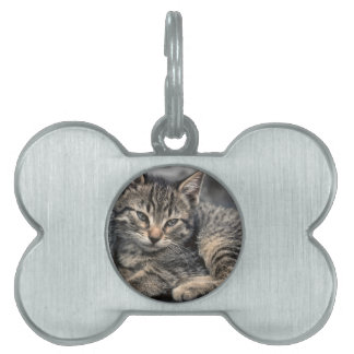 Curbside Kitten Pet Name Tag