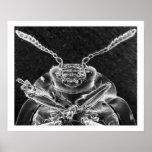 Curculionidea, Snout Beetle in Chrome Posters