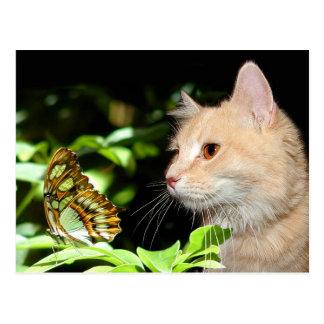 Curiosidad del gato tarjetas postales