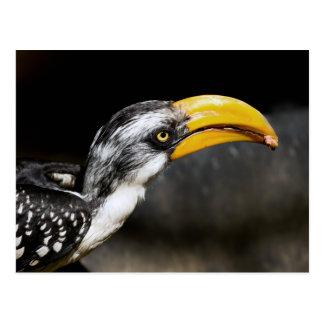 Curiosidad del Hornbill Postales